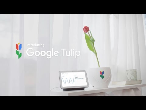 Introducing Google Tulip