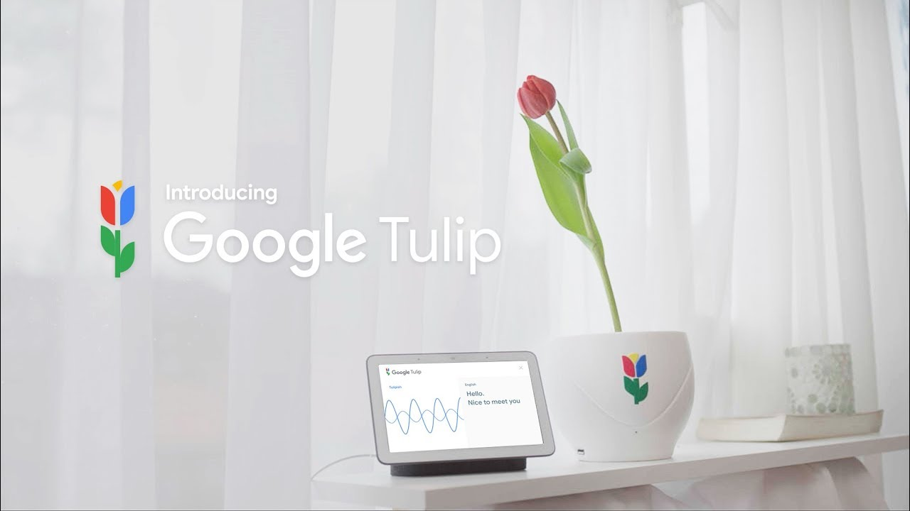 Image result for google tulip