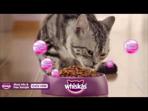 Whiskas - Nurture Their Nature