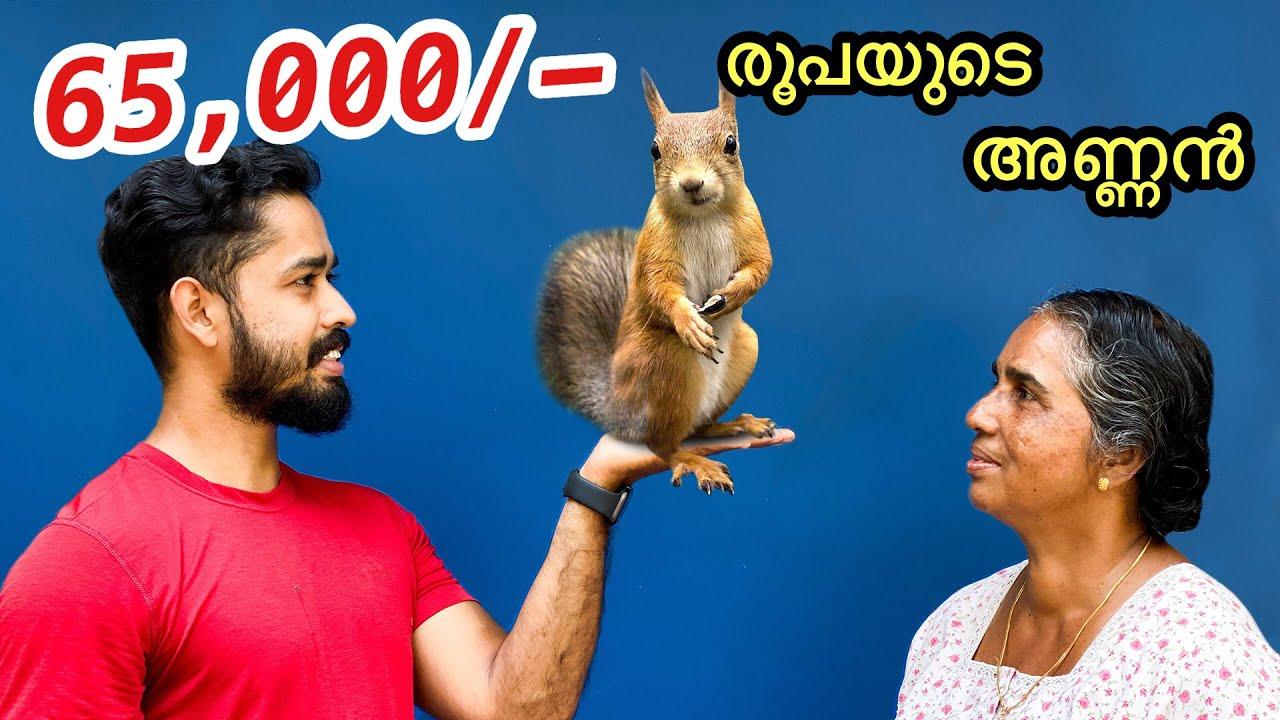 65,000/- രൂപയുടെ അണ്ണനെ മേടിച്ചു   Bought two Cambodian Squirrels   First Time In Kerala