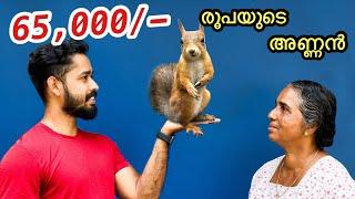65,000/- രൂപയുടെ അണ്ണനെ മേടിച്ചു | Bought two Cambodian Squirrels | First Time In Kerala