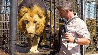 lions-need-patience-the-lion-whisperer