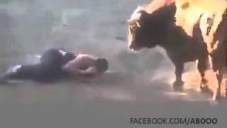 dangerous bull kill man