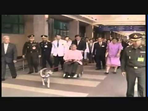 ทรูปลูกปัญญา-สุนัขทรงเลี้ยง และสุนัขไทยหลังอาน