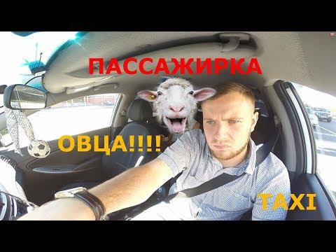 #19 Охреневшая пассажирка в такси, высадил!!! Яндекс Такси!!!