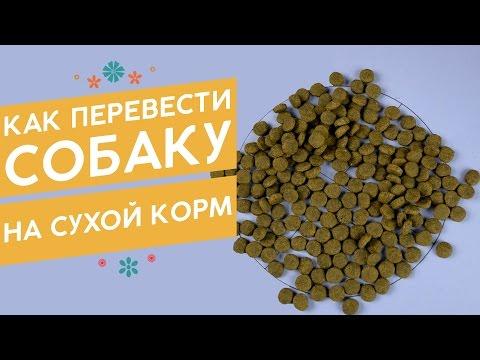 Как перевести собаку на сухой корм с натурального питания?
