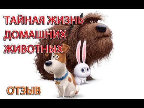 Тайная жизнь домашних животных - отзыв о мультфильме