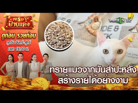 เศรษฐีป้ายแดง EP.14 | ทาสแมวต้องดู ขายทรายแมวสร้างรายได้อย่างงาม | 18 มี.ค.64 | ThairathTV