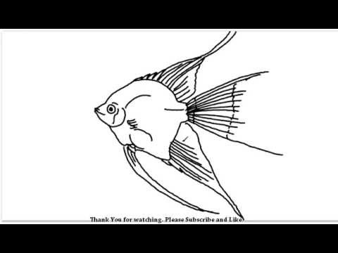 How To Draw An Aquarium Fish Yzarts Yzarts Youtube