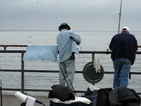 Summer pier fishing at redondo beach pier california youtube for Redondo beach pier fishing
