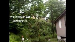 剪定(枝切り) 金沢市北袋町