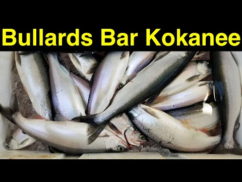 bullards-bar-kokanee-fishing