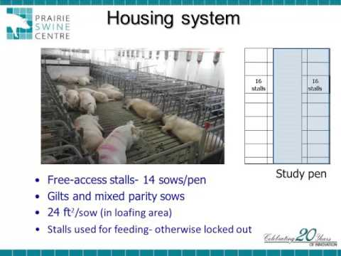Dr. Jennifer Brown - Group Formation And Mixing Times For Gestating Sows