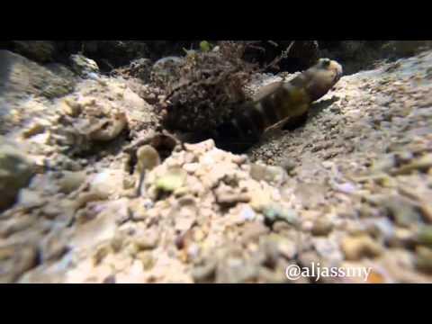 marin life in  bahrain