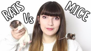 🐀 RATS Vs MÏCE 🐁  Which one should you get?