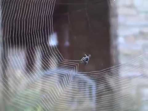 Did you see before spider Web construction close -up? much watch