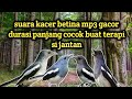 Suara Burung Kacer Betina Gacor Media Terapi Jantan  Mp3 - Mp4 Download