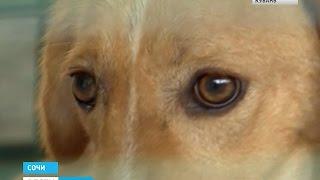 Сочинские приюты для собак переполнены