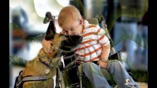 Роль собак в житті людини