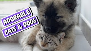 Cute Pets Doing Funny Things (2019) Cute Pets Videos