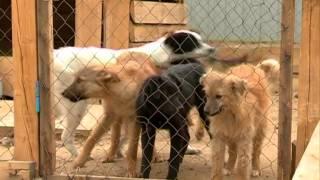 «Амурскому комунальщику» осталось отловить 11 собак в Благовещенске, чтобы исполнить контракт по ...