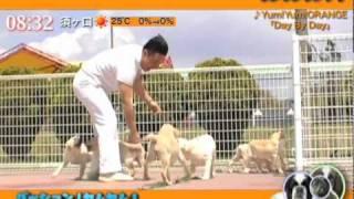 ヤムヤムの新曲。犬かわいい! パッション??