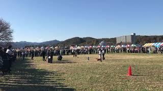 11月17日&18日の二日間、日本犬保存会の全国展が東京都八王子市にて開...