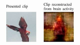 Movie reconstruction from human brain activity(PLEASE READ THE CAPTION TO UNDERSTAND THIS VIDEO ** The left clip is a segment of a Hollywood movie trailer that the subject viewed while in the ..., 2011-09-22T00:47:31.000Z)