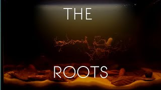 Cinematic THE ROOTS  Making a Planted Blackwater Aquarium
