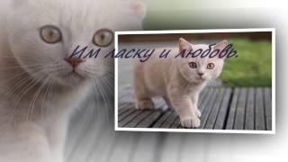 Всемирный день кошек. Видео открытки.