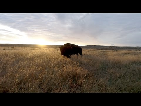 Restoring the North American Prairie