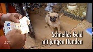 Süße Welpen suchen ein Zuhause Schnelles Geld mit jungen Hunden (ZDF 37°)