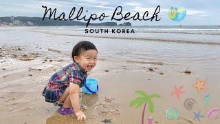 Mallipo Beach Sea Stars 만리포해수욕…