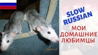 My Pets/Slow Russian/Мои Домашние Животные (RUS SUBS) | Автоматический Заработок Программы