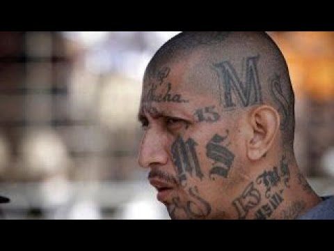 'Hunting MS-13': What