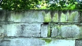 Бельгийская овчарка (малинуа)    прыжок в высоту(Эта порода в книге гиннеса по прыжкам в высоту. Мировой рекорд более 3х метров. Моему всего 11 мес было когда..., 2014-05-17T12:37:10.000Z)