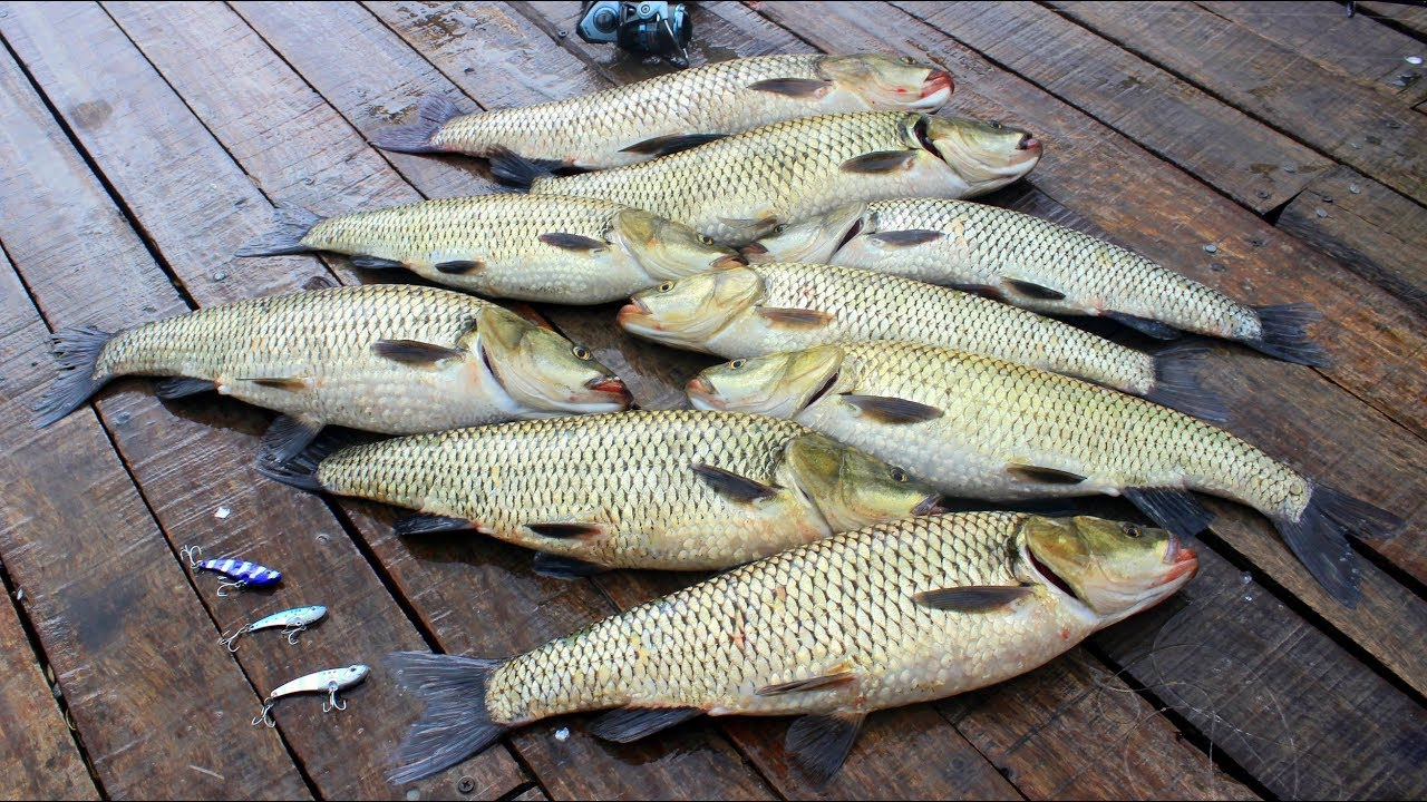 1 Saatte 20 kg Balık Yakaladık / En Keyifli Balık Avlama Şekli