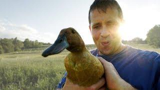 This Duck has a Secret