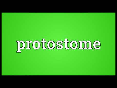 Protostome Meaning