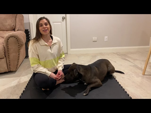 Video: Teaching Your Dog a Marker