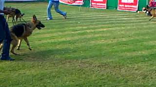 The Kolkata Dog Show (alcician)