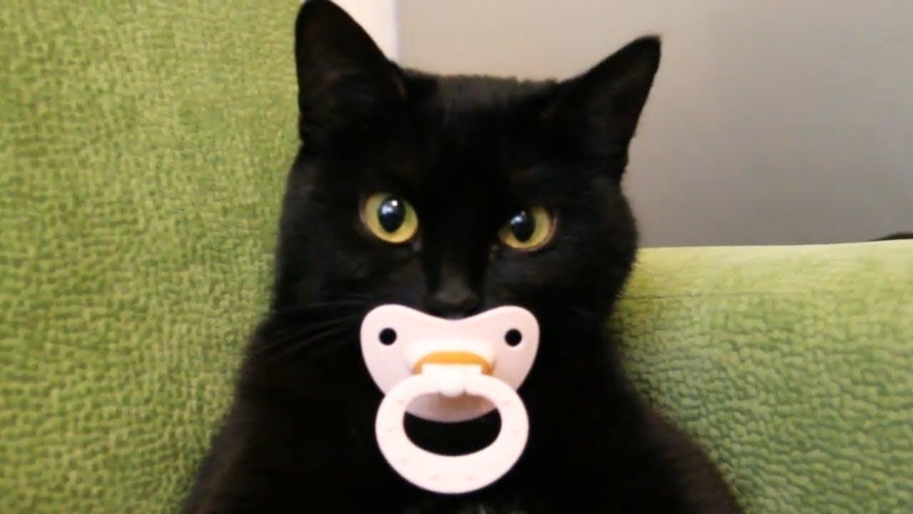 Котики и кошки, Приколы с котами, Смешные видео про котов котят и кошечек 2019