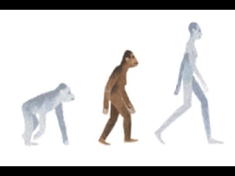 Google rinde homenaje a Lucy la australopithecus