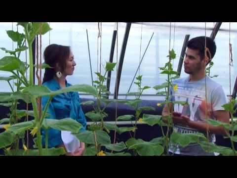 видео: Мыкты Чарба - Достор иштеткен куноскана