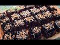 Reteta - Negresa de post cu nuci | Bucataras TV