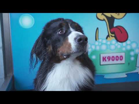 Business Opportunity - K9000 Self Serve Dog Wash Canada