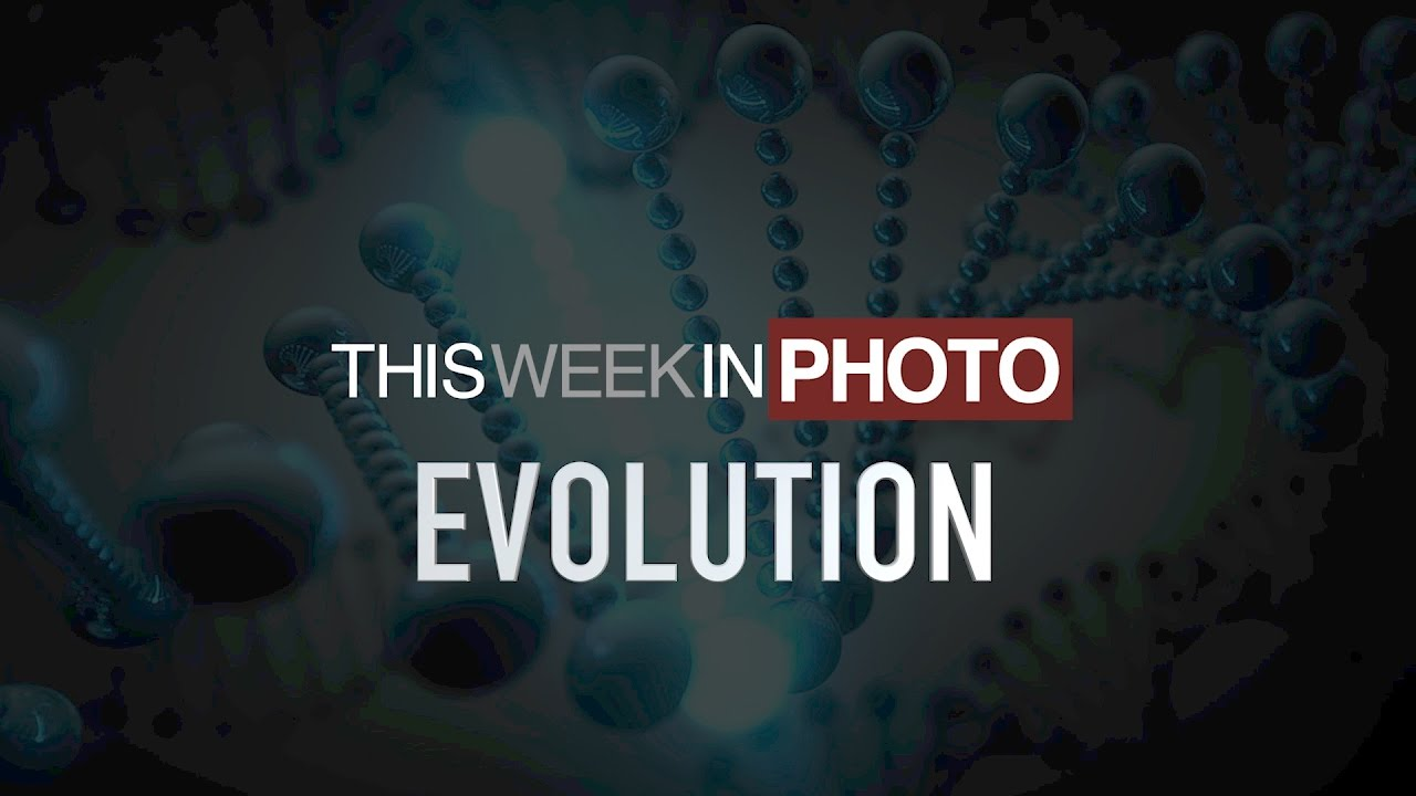 TWiP 326 - The Evolution of Image Editing - This Week in Photo