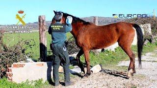 Dozens held in Spain in horsemeat scam probe - Europol thumbnail