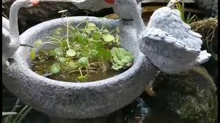 전원주택 정원 꾸미기 옥상 테라스 백조 연못 카페 마당…
