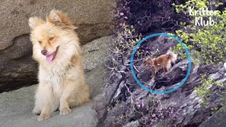 Dog Waits In A Slope Of A Mountain For 2 Years To Find His Owner (Part 1) | Kritter Klub